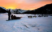 You won't miss a beat in Revelstoke - dog-sledding-sunset-180x110